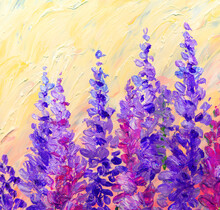 Oil Painting. Bright Lupine Fl...