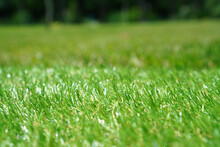 Artificial Grass At The Yard. ...