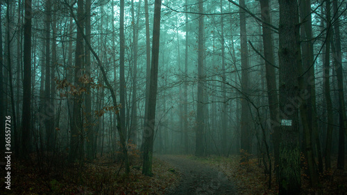 forest vibe