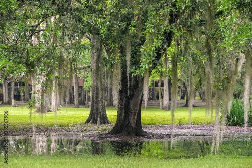 Photo bayou tree