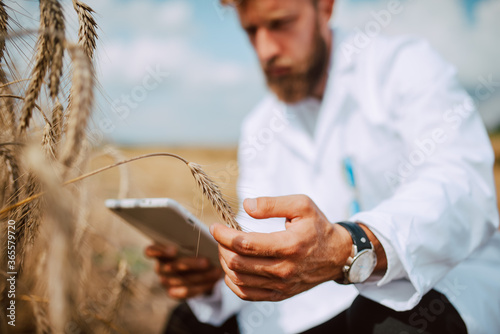 Close up of tablet computer in hand male caucasian technologist agronomist  in the field of wheat checking quality and growth of crops for agriculture Canvas Print