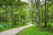 Paved Greenway Trail Through The Woods.