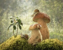 Mushroom In The Forest With Cu...