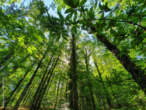 Bosques de castaños y robles, valle del ambroz