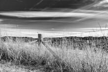 Grayscale Shot Of Nature Behin...