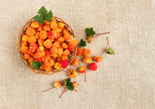 Cloudberry In A Basket On A Background Of Burlap. Healthy Diet. Collecting Forest Ripe Cloudberries From The Forest. Summer Berry. Flatlay
