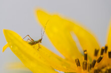 Daisy Flower With A Bug - Image