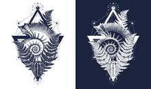 Nautilus Shell Prehistoric Tat...