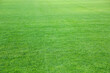 Green lawn with fresh grass as background