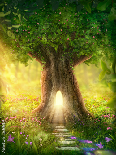 Foto Enchanted forest