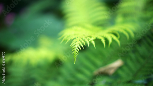 Close up fern forest with beautiful river and mossy forest background tropical l Wallpaper Mural
