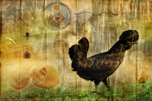 The Chicken And The Egg - An A...