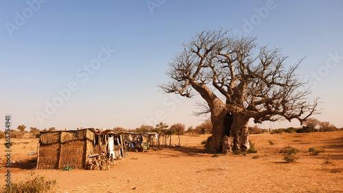 baobab Poster Mural XXL