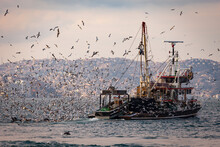Fishing Boat Heavily Loaded By...