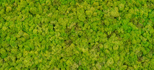Green Moss Background Texture ...
