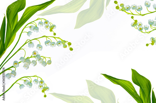 Valokuva Lily of the valley flower on white background