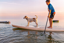 Young Boy On Paddleboard With ...