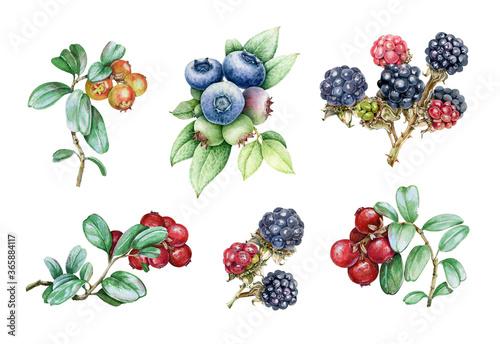 Fotografie, Obraz Blueberry, blackberry and cowberry watercolor illustration set