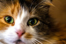 Close Up Portrait Of The Cat F...