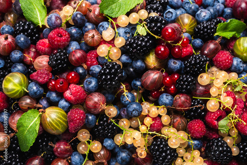 Gooseberries, blueberries, mulberry, raspberries, white and red currants Canvas Print