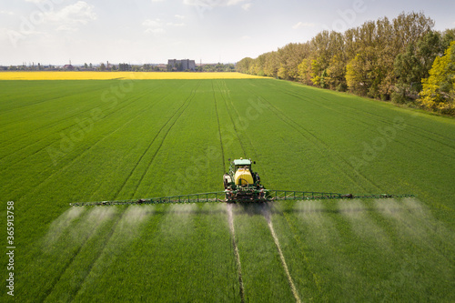 Fototapeta Tractor spraying chemical pesticides with sprayer on the large green agricultural field at spring. obraz