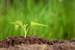 A green sprout breaks out of the ground against the backdrop of greenery. Business concept, new beginning, new life. Copy space.
