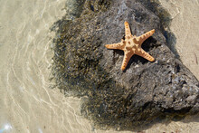 Starfish On A Black Stone Surr...