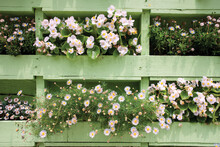 White Flowers In Light Green Wood Pallet Wall Planter