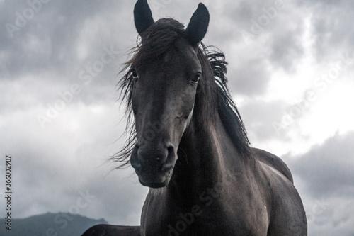Cuadros en Lienzo Horse on a mountain meadow