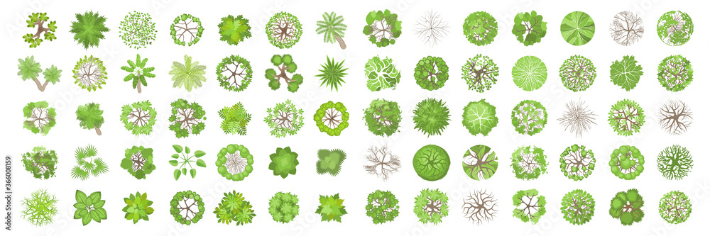 Fototapeta Trees top view. Different plants and trees vector set for architectural or landscape design. (View from above) Nature green spaces.