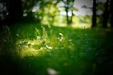 足下の草原