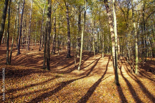 Autumn forest, deciduous beech trees, Chriby, Czechia Fototapet