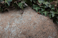 Background Of Rounded Stone Boulder Fringed In Dark Green English Ivy, Creative Copy Space, Horizontal Aspect
