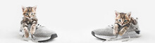 Cute Tabby Kittens On Gray Shoes Look At The Camera. Web Banner With Copy Space.Concept Stay Home