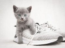 Cute Gray Kitten Lying On Gray Shoe Look At The Camera