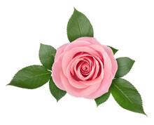 Rose Flower Arrangement Isolat...