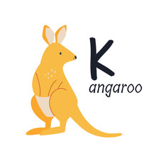 Funny Image Of A Kangaroo And ...