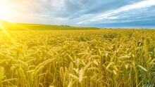 Agriculture Background -  Land...