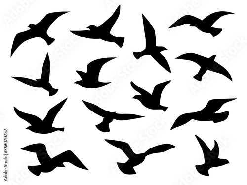 Fotografía Bird silhouettes