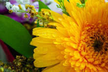 The Image Of Yellow Chrysanthe...