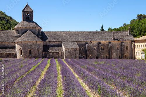 Fototapety, obrazy: gordes abbeby provence countries lavender fields and sunflowers region of france