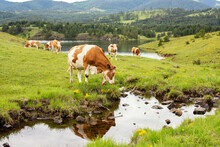 A Cow Grazing The Grass In Front Of The Mountain Stream