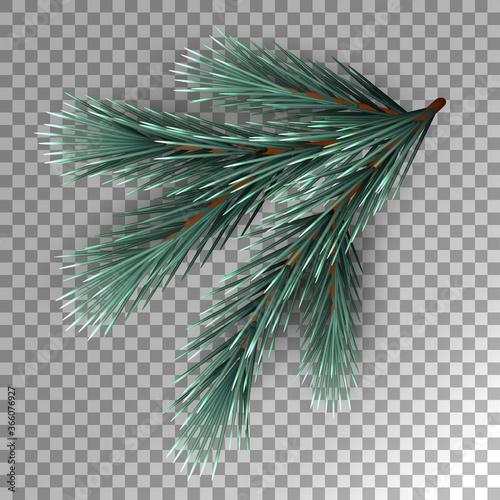 Fotomural Fir Tree Branch