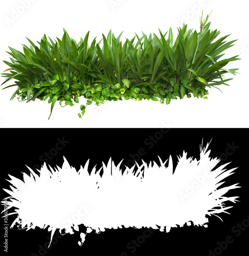 Ornamental plant isolated on white Wallpaper Mural