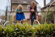 Plants Grow In Raised Garden B...