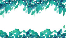Teal To Green Leaves Isolated ...