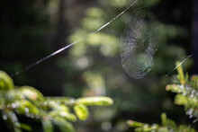 A Web Is Woven Between Two Trees In The Forest.