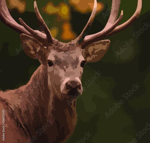 Fototapeta Horned forest deer close-up obraz
