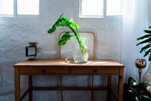 Plant In Glass Vase By Golden ...
