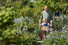 Grandfather With Granddaughter In Wheelbarrow In Allotment Garden